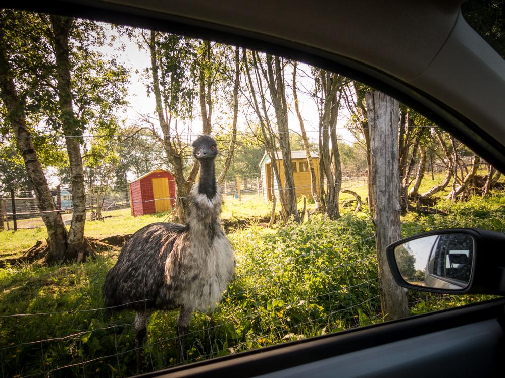… tatsächlich gibt's aber nur Emus statt T-Rex.